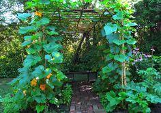 My vegetable trellis arbor  Aug 2, 2013