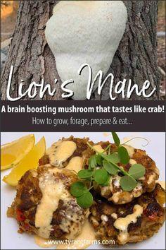 Okra Recipes, Vegan Recipes, Weed Recipes, Burger Recipes, Stuffed Sweet Peppers, Stuffed Mushrooms, Edible Mushrooms, Lion Mane, Crab Meat