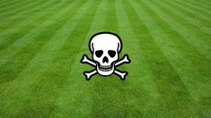 Our Lawns Are Killing Us - organicgarden.org.uk Agricultural Land, Weed Killer, Grow Organic, Lawns, Lawn Care, Dog Cat, How To Look Better, Food, Essen