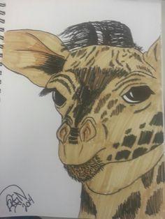 Juvenile giraffe sharpe marker