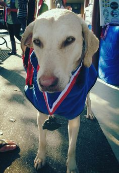 First place in the American Diving Dogs Dock Jumping Competition Rookie Division Finals.  Go Sasha!