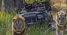 Desierto Viaje de la mosca en Safari