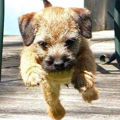 Follow, like and post feedback if you think this pet is cute:) #cats #catsagram #catstagram #instagood #kitten #kitty #kittens #pets #animal #petstagram #petsagram #catsofinstagram #ilovemycat #instagramcats #catoftheday #lovecats #lovekittens #catlover #instacat #dog #puppy #pup #dogsofinstagram #ilovemydog