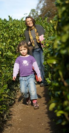 Race your family to the middle of the maze at Glendurgan
