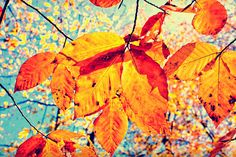 optimistic photography  autumnal photo  fall by slightclutter, $32.00