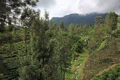 Paisajes desde el tren de Nuwara Eliya a Kandy
