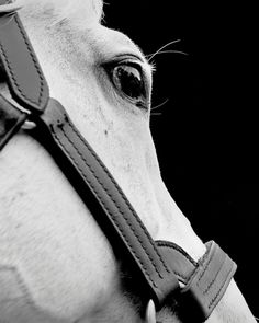 www.pegasebuzz.com | Equestrian photography : Neil Latham - American Thoroughbred