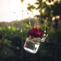 Glass Photography, Miniature Photography, Cute Photography, Creative Photography, Photography Store, Flower Photography, Photography Business, Newborn Photography, Beautiful Flowers Wallpapers