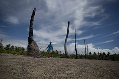Father Martin, parish priest on the island of Abaiang walks through the wasteland that used to be the village of Tebunginako garden. Rising sea water made the soils heavily saline and unable to support the Bannanas and Taro vital to the villagers' survival