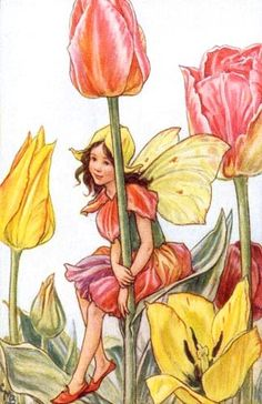 Tulip fairy *Cicely Mary Barker*