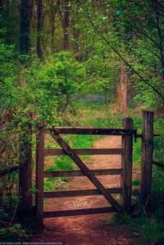 Gate at the Forest of Dean, Gloucestershire, England on Flickr.