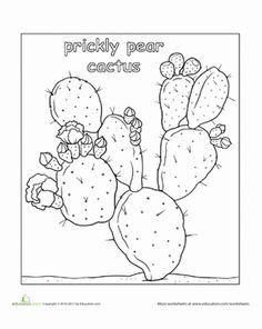 color prickly pear cactus