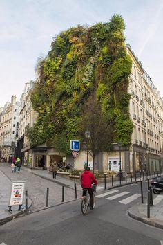 Mur végétal, Rue des Petits Carreaux, 2e