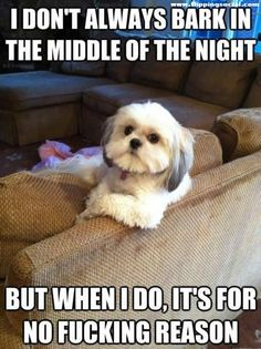 I love my poochies, but this is so them!