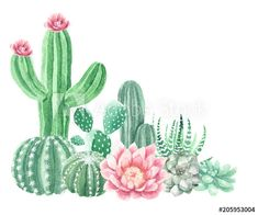 Clipart photos, royalty-free images, graphics, vectors & videos Watercolor Cactus and Succulents Cactus Drawing, Cactus Painting, Watercolor Cactus, Cactus Art, Watercolor Paintings, Watercolor Succulents, Painting Art, Buy Cactus, Image Cactus