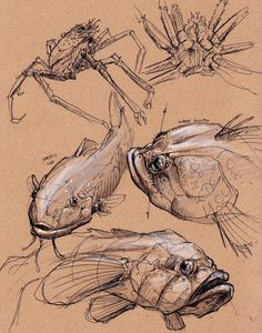 Tyler Chow: Dynamic Sketching - Field Trip to the Aquarium of the ...