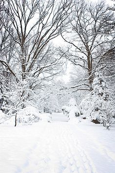 Botanic garden in Újszeged, Hungary | Flickr - Photo Sharing!