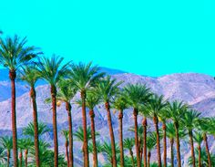 Beautiful Palm Desert Desert Life, Palm Desert, Amazing Places, Beautiful Places, Desert Colors, Ps I Love You, Rancho Mirage, Coachella Valley, Space Place