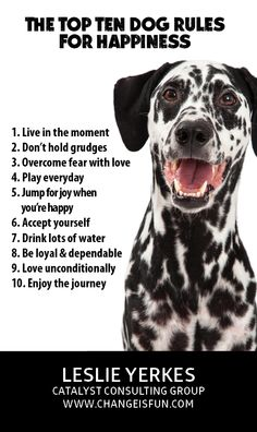 My best life lessons come from my four legged friends!
