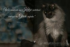 Wo immer sich eine Katze niederlässt...  #spruchbilder #spruchbilderkatzen #katzenspruchbilder #katzensprüche #katzenzitate #katzenweisheiten