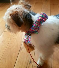 Check out this item in my Etsy shop https://www.etsy.com/uk/listing/465599947/multi-coloured-dog-collar-accesory-with
