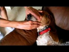 How To Stop Reverse Sneezing - Finally, Relief For The Fur Kids! - A Dog's Love
