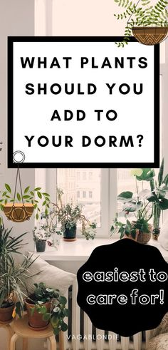 These 11 easy plants can live happily in your dorm or apartment - low in maintenance and high in reward! | dorm plants | dorm decor | dorm inspiration | plant tips | college hacks