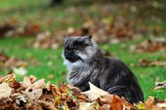 24 Stunning Photos of Pets in Fall Foliage