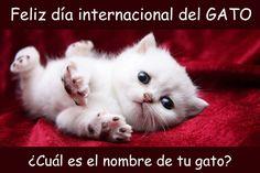 Feliz día internacional del GATO   Chistes