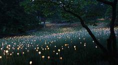 bairani: Field of lights,
