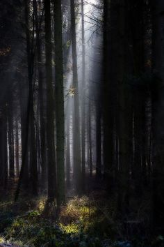 "The photographer called this shot of Black Forest, ""Forest of Gondor."" The Black Forest region is supposedly blessed with a ""rich mythological landscape. It is said to be haunted by werewolves, sorcerers, witches and the devil in differing guises. Helpful dwarves try to balance the scales..."