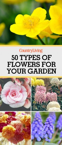 These flowers are the best to have in your garden. Save and start planting!