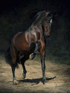 Horses...the most beautiful animal