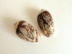 2 Carved Olive Snail Shells.  Vintage seashell by ShopLarkAbout
