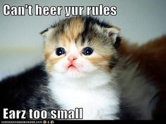 funny pictures - Can't heer yur rules  Earz too small