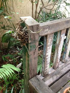 Prendi a orquídea na lateral do banco do jardim.