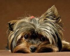 The Flea Allergy In Dogs And Cats