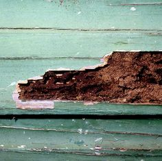 Dear TZ, I am buying a home and I'm getting a Home Inspection. But the inspector said I need a termite inspector, radon test and a tank sweep. Termite Damage, Termite Control, Termite Inspection, Home Inspection, Signs Of Termites, Walnut Creek, Natural Homes, Pest Control Services