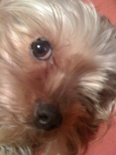 Our Starr Dogs, Animals, Animales, Animaux, Pet Dogs, Doggies, Animal, Animais