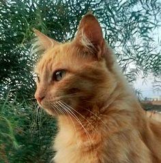 #Mitya Minha felina linda!!