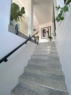 These stunning full grind polished concrete stairs are a showstopper in the entrance way if this lucury home Entrance Ways, Entrance Design, Concrete Stairs, Concrete Floors, Polished Concrete, Showcase Design, Hand Blown Glass, Glass Pendants, Luxury Homes
