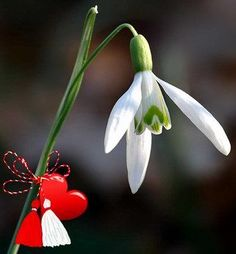 Imagini pentru poze cu ghiocei de 1 martie Diy And Crafts, Bird, Christmas Ornaments, Holiday Decor, Flowers, Plants, Home Decor, 8 Martie, Bouquets