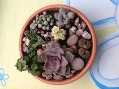 Mi mini jardín de suculentas