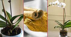 Yaprakları mantarlanan, kökleri çürüyen ya da çiçekleri dökülen orkide bakımı nasıl yapılır merak ediyorsanız solan orkide nasıl canlandırılır, anlatıyoruz. Elsa, Plants, Home Decor, Bulgur, Homemade Home Decor, Plant, Interior Design, Home Interiors, Decoration Home