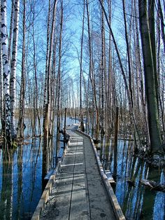 Savoring a beautiful walk along this boardwalk across the water would certainly take the cold edge off the day: Winter path, Helsinki, Finland. Oh The Places You'll Go, Places To Visit, Seen, All Nature, Wonders Of The World, Paths, Beautiful Places, Scenery, Around The Worlds
