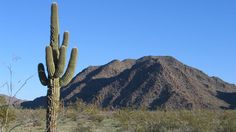 The North Maricopa Mountains Wilderness, about 35 miles
