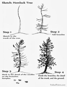 Art Lesson: Sketch Page of the Hemlock Tree.