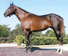 Devil Hunter(1999)Pulpit- Grand Girlfriend By Private Account. 4x5 To Buckpasser. 2 Starts $445.
