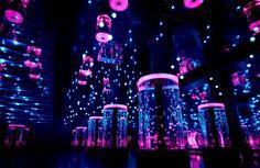 水族館に桜が咲き乱れる!「エプソン アクアパーク品川」で桜×氷×水族館の体験型イベント開催 - Find Travel