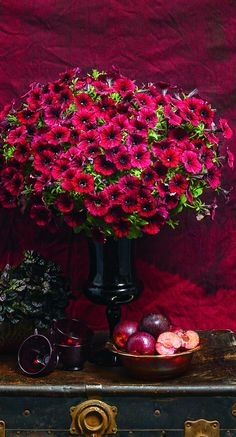 If you love the color red, then Supertunia Black Cherry is the plant for you. Dark red blooms are enhanced by dark centers. Combine with yellow or a dark sweet potato vine for an impressive combination.
